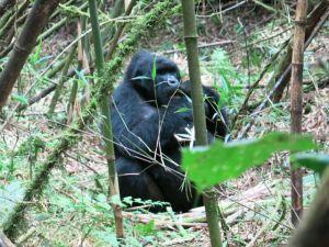 Rwanda 2013-045