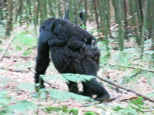 Rwanda 2013-054