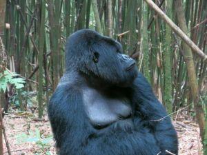Rwanda 2013-055