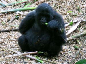 Rwanda 2013-056