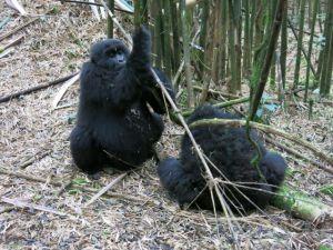 Rwanda 2013-057