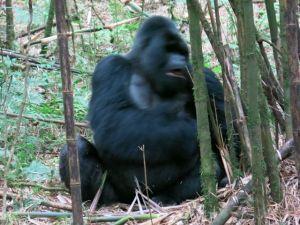 Rwanda 2013-060