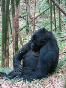 Rwanda 2013-069