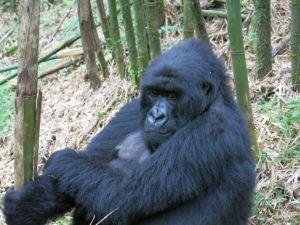 Rwanda 2013-070