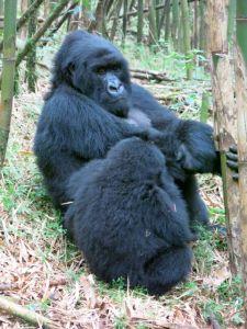Rwanda 2013-073