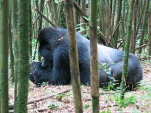Rwanda 2013-074