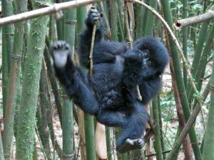 Rwanda 2013-093