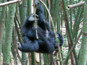 Rwanda 2013-094