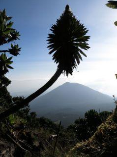 View of Bisoke volcano